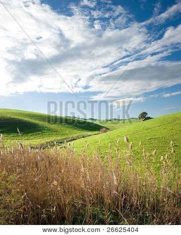 Land Landschaft mit Stiele der Reed Blüte