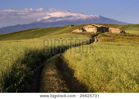 track cross cereal field on background Etna