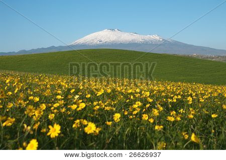 yellow flowering, green grass, white of snowcapped Etna and blue sky of sicilian landscape