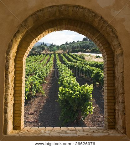 view through a window arched stone and brick along the rows of a vineyard at the evening