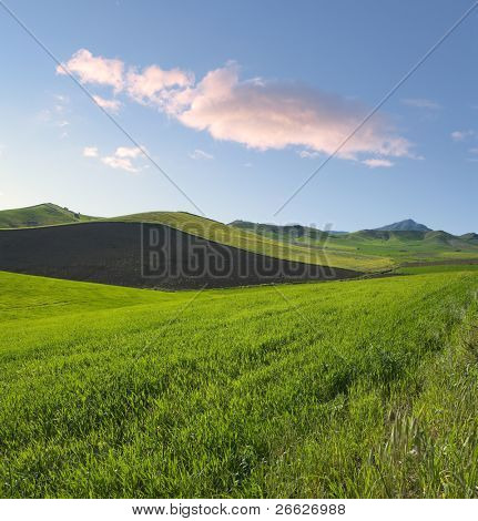 square composition for spring landscape of green grass and plowed land at the twilight