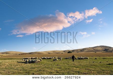 shepherd and his flock of sheep in a prairie of the central Anatolia  under a big cloud in the blue sky at the evening