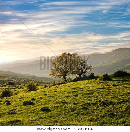 country landscape with oak tree in a spring sunset
