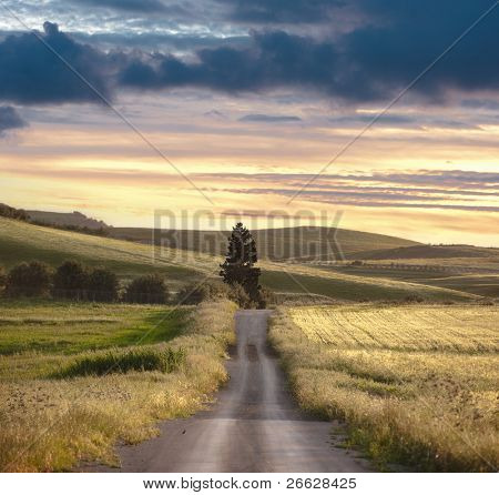road crosses rural landscape with the silhouette of tree on background the colors of the sunset