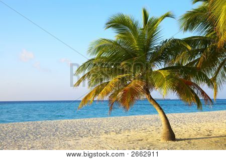 Palmtree On A Tropical Beach