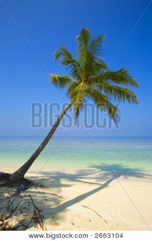 One Palmtree