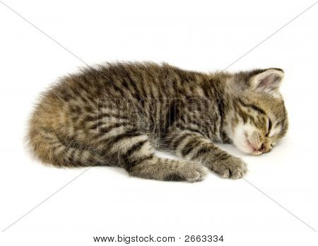 Kitten Taking A Nap On A White Background