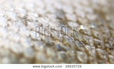Macro shot of Fresh salmon steak with scales, low depth of focus
