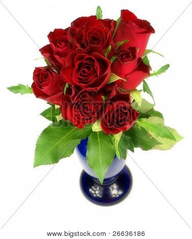 Red roses in vase isolated on white background