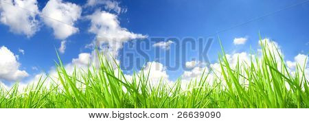Fresh green grass with perfect sky background