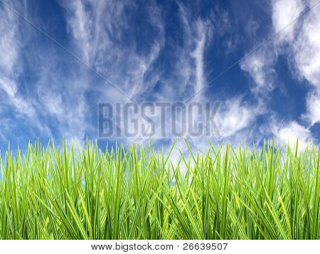 Fresh grass with sky