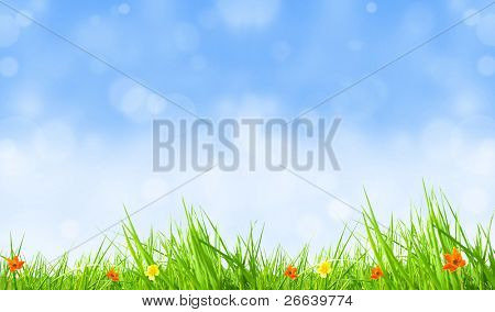 Fresh spring background with blurred blue sky