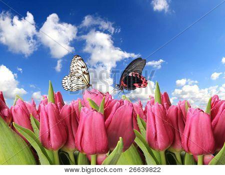 Fresh dewy purple tulips with butterflies
