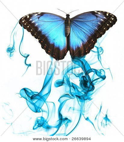 Butterfly with smoke, isolated on white background
