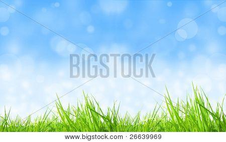 Desenfoque de fondo de hierba fresca con brillante cielo