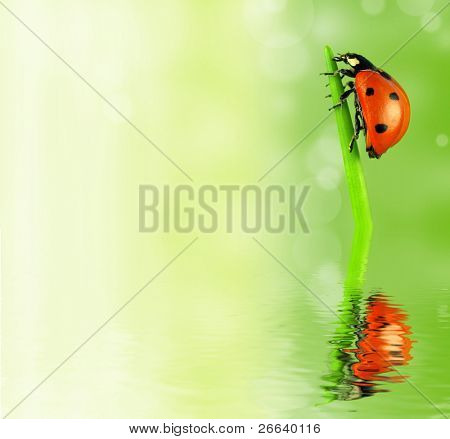 Lady bug on stalk reflected in water