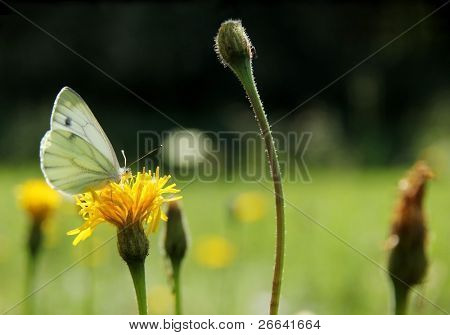 Macro shot of butterfly in meadow