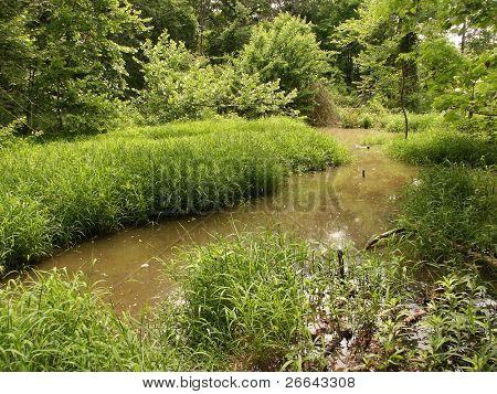 Tierra de la hierba del pantano