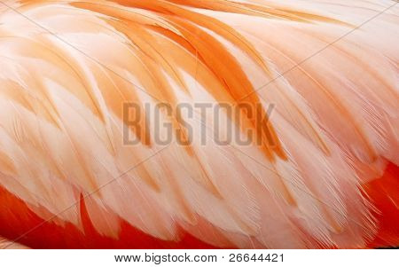 Flamingo's feathers