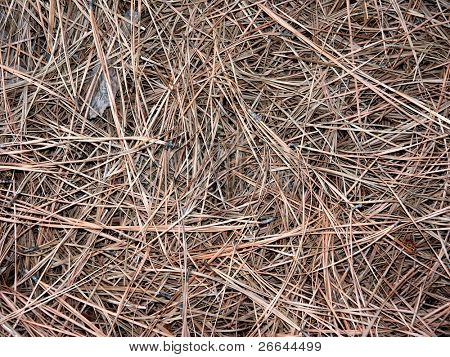 Brown pine needles mulch background