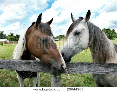 Two horses standing close, as if whispering