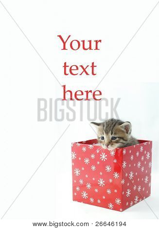 Kitten in a gift box with space for text