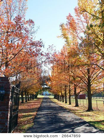 Long driveway with fall trees