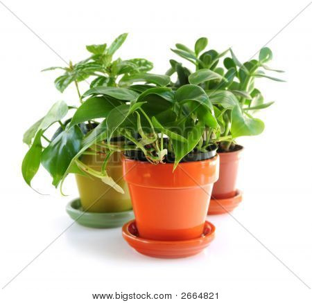 Assorted Houseplants