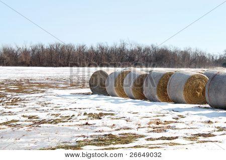 Kautionen von Heu auf schneebedeckten Feldes