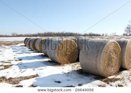 Kautionen von Heu auf schneebedecktes Feld