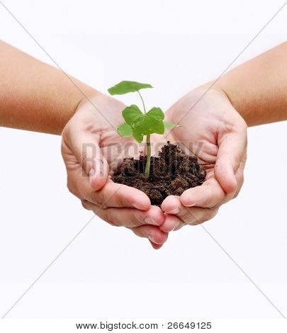 Two hands with a plant and dirt