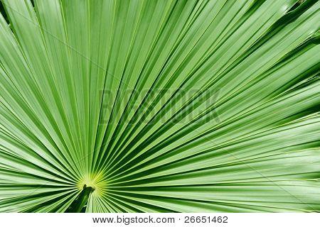 Palm tree closeup