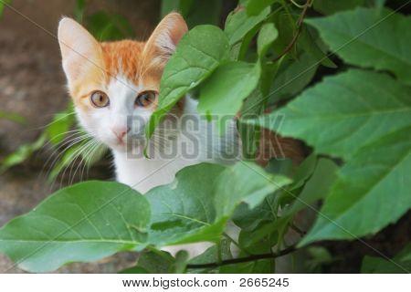 Cat Hiding In Leaves
