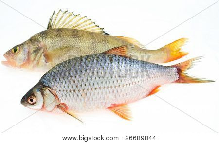 carp and perch isolated on white background