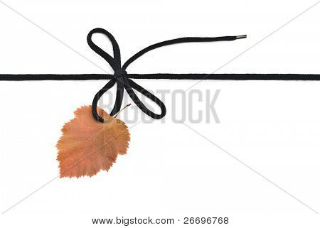 Black shoelace,bow with autumn leaf