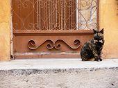 Постер, плакат: Молодой Кот ждет на двери дома