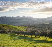 a green valley with olive trees of sicilian hinterland at the twilight
