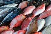 Sales Stall  - Sea Bass And Tuna, Close Up. Fresh Fish At Seafood Market In Sri Lanka. poster