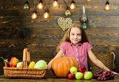 Harvest Festival Concept. Kid Girl Near Basket Full Of Fresh Vegetables Harvest Rustic Style. Child  poster