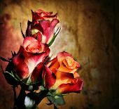 Roses on grunge background