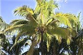 Blurry Palm Tree On Sunny Sky. Tropical Nature Defocused Landscape. Coco Palm Leaf Digital Illustrat poster