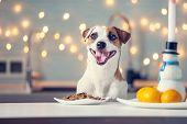 Dog eating food at home. Happy pet santa poster