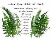 Green Tropical Leaves Vector Illustration - Frame For Random Text On White Background. Jungle Exotic poster