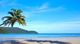 image of beach holiday  - tropical beach with palms - JPG