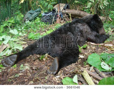 The Hunt. Dead Brown Bear.