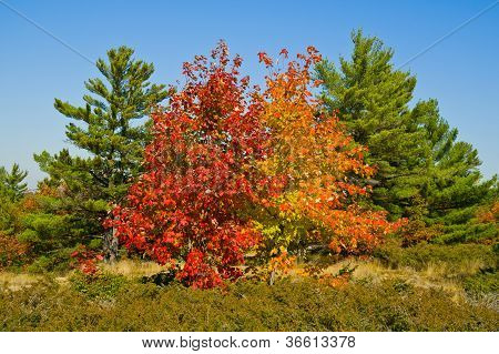 Colourful Autumn Trees