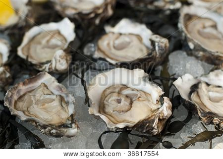 Fresh oysters plate served cold