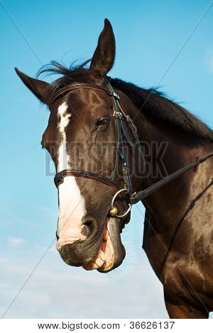 Funny Horse Head Smiling Over Blue Sky