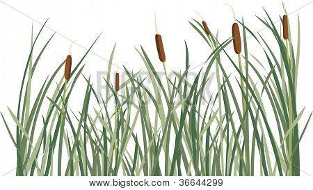Reed e fundo de grama verde