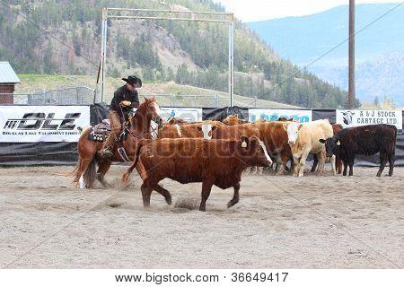 Horse Cutting Show